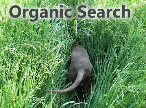keyword-organic-search